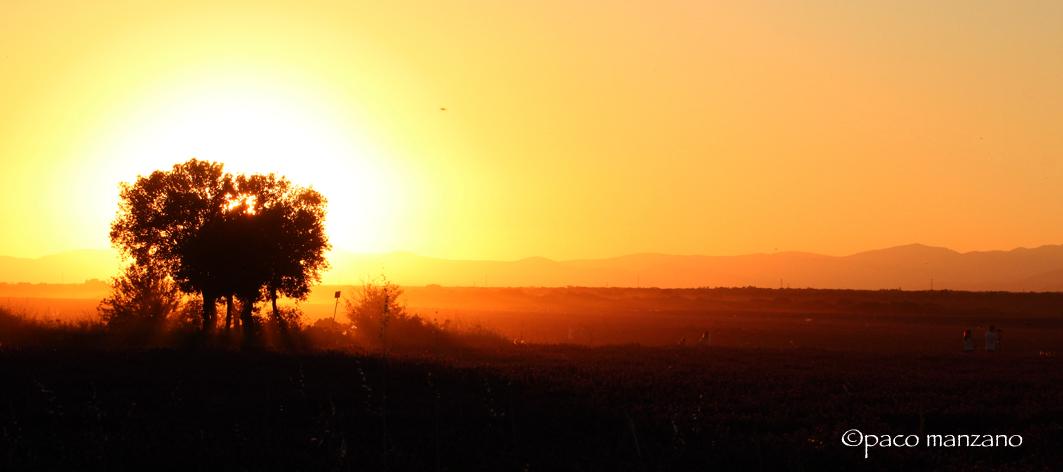 Atardecer en los campos de lavanda en Brihuega, Guadalajara….